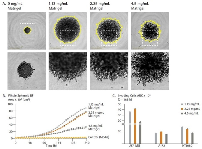 Rapid visualization and assessment of treatment effects using IncuCyte® vessel views. U87-MG cells were seeded in ULA round bottom 96-well plates (2,500 cells/well) and allowed to form spheroids (3 d). Spheroids were then treated with serial dilutions of anti-metastatic compounds and embedded in Matrigel (4.5 mg/mL) to induce invasion (up to 10 d). IncuCyte microplate vessel views show effects of treatments on spheroid invasion (whole spheroid area; yellow outline mask) 5d post treatment (A and B). Images captured at 4x magnification.