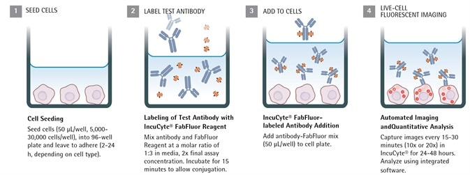 Cancer Drug Discovery Antibody Internalization Assays