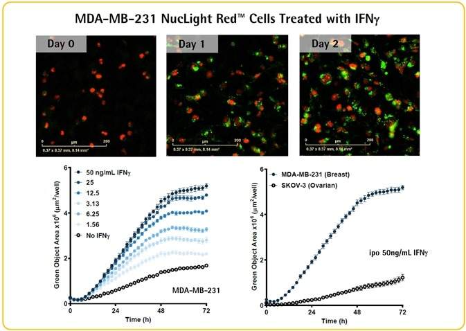 IFNγ-induced upregulation of PD-L1 checkpoint protein