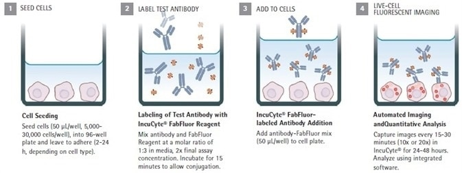 Fluorescent 96-Well Antibody Internalization Assays
