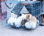 Infectious diseases from animals likely to cause further pandemics