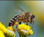 New study can help track the impact of climate change on honey bees