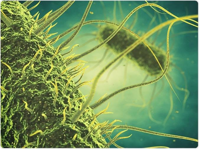 Salmonella bacteria 3d illustration. Image Credit: nobeastsofierce / Shutterstock