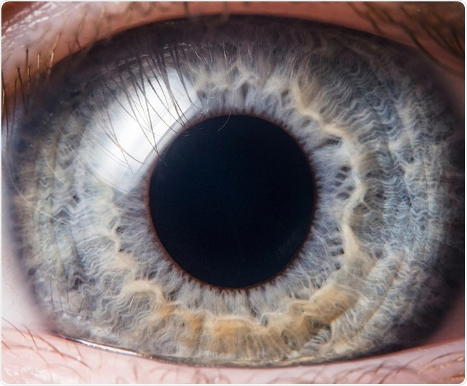 ACE2 and TMPRSS2 are expressed on the human ocular surface, suggesting susceptibility to SARS-CoV-2 infection. Image Credit: photoJS / Shutterstock