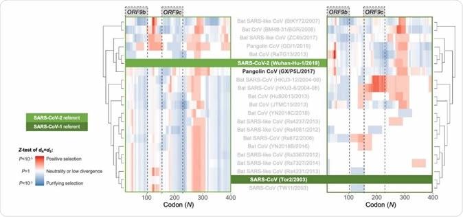 ventana resbaladiza de las Entre-especies de los genes que recubren el análisis de N. Pairwise OLGenie del gen de N a través de sarbecoviruses, en el marco de lectura ss13. Cada genoma fue comparado con SARS-CoV-2 (lado izquierdo) y SARS-CoV (gráfico del lado derecho).