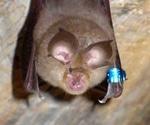 Host-virus interaction drives adaptive mutation in bat CoV related to SARS-CoVs