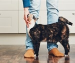 Study shows cats can harbor SARS-CoV-2 without any symptoms