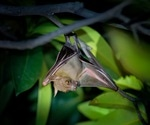 Spillover of more bat coronaviruses likely due to destruction of wildlife habitats