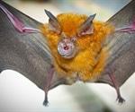 Health expert warns of the increasing threat of animal-to-human coronaviruses