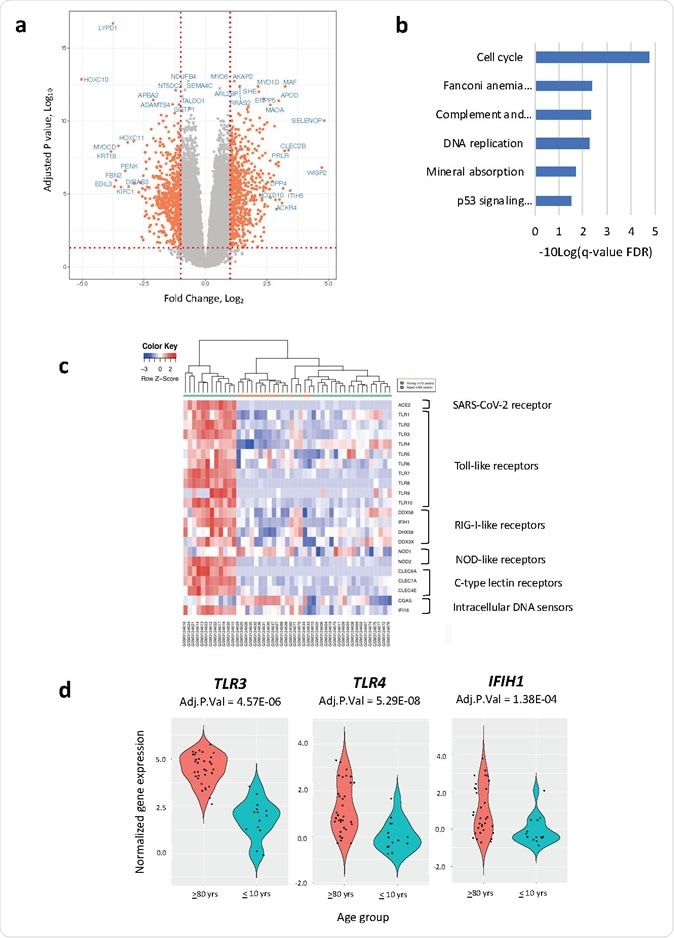 Gene expression differences between dermal fibroblast cell lines derived from the oldest (≥80 years) and youngest (≤10 years) age groups (a) Volcano plot showing gene expression differences between oldest and youngest age groups (b) KEGG pathways enriched in differentially expressed genes between the oldest and youngest age groups (c) Heatmap of differentially expressed pattern recognition receptor genes between the oldest and youngest age groups (d) Violin plots of the pattern recognition receptor genes that had an Adjusted P Value <0.05 and a log2FC >1.0 between the oldest and youngest age groups