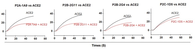 Antibody and ACE2 competition for binding to SARS-CoV-2 RBD measured by SPR.