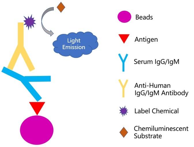 Principle of chemiluminescence-immunoassay method.