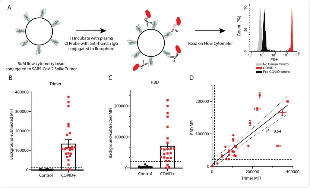 Detection of anti-SARS-CoV-2 IgG using RBD and trimer constructs. (A) Graphical representation of the methods. (B, C) IgG levels in plasma from 24 COVID+ and 30 pre-COVID-19 subjects were measured using trimer-conjugated (B) or RBD-conjugated (C) microspheres. Dashed lines indicate the cut-off for positive sample designation, calculated as (Maximum control value + 5 standard deviations, at MFI = 12,432 for trimer, 27119 for RBD. E) The median fluorescent intensity of IgG measured on the trimer and RBD assays was significantly correlated. Dashed lines indicate cut-offs for positive designation, and the solid line shows a linear regression with 95% confidence intervals indicated with dotted lines, r2 = 0.64, slope is significantly non-zero (F1,46=82.4, p<0.0001).