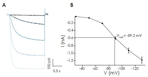 Activation of HCN2 expressed in HEK cells on the SyncroPatch 384PE by hyperpolarizing voltage steps. (A) Raw traces from an exemplar cell expressing hHCN2 recorded on the SyncroPatch 384PE. Shown are current responses to decreasing voltage steps from -30 to -130 mV. (B) Current-voltage plot for an average of 346 cells. Shown are mean of steady-state current amplitudes ± S.E.M.