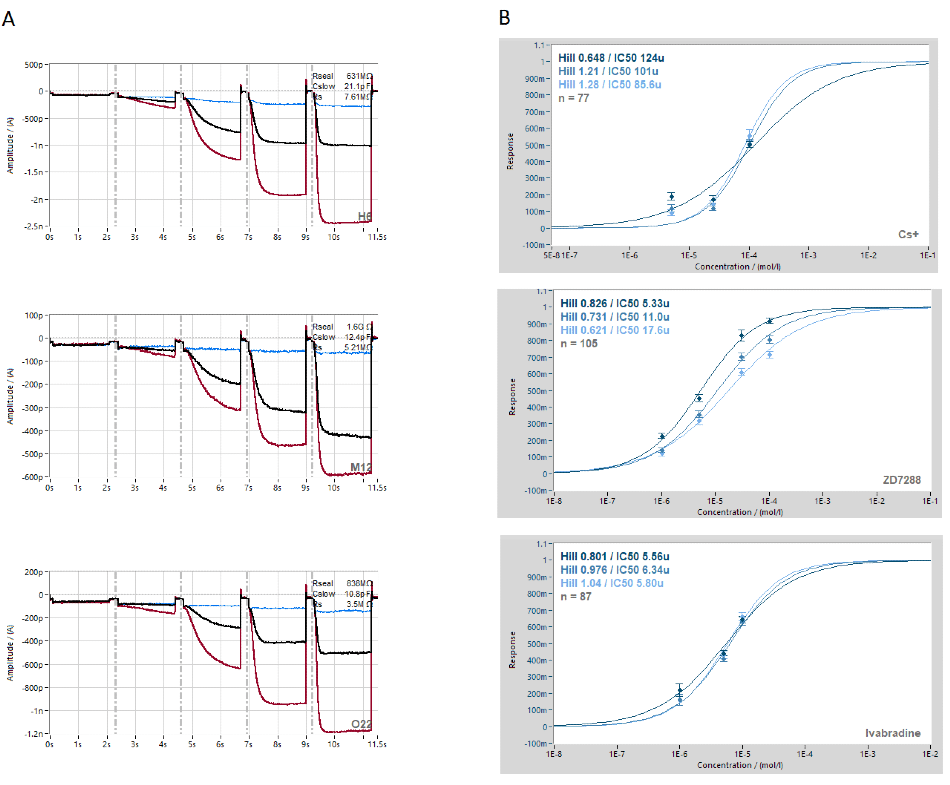 Block of hHCN2 by Cs+, ZD7288 and ivabradine. A. Raw current traces (red traces) from example cells showing activation of Ih by decreasing voltage steps followed by block with single concentrations of Cs+, ZD7288 or ivabradine (black traces in left panel) and full block with 2 mM Cs+ (blue traces). B. The concentration response curves were calculated across the plate. The data collected were normalized to the reference current and fitted with a standard Hill-equation. Average concentration response curves were calculated for the -90 mV, -110 mV and -130 mV voltage steps.