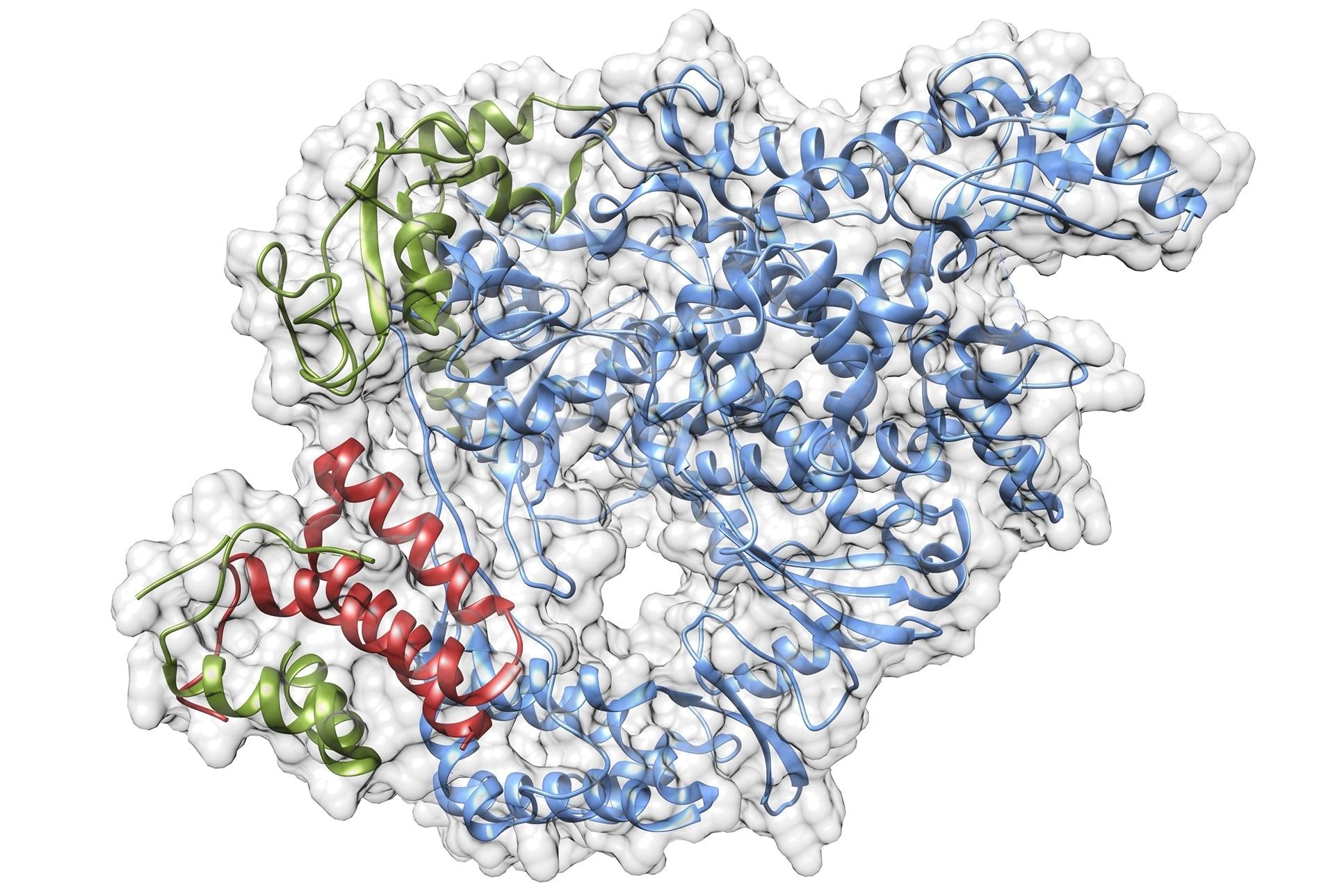 Les scientifiques visent à comprendre la biologie du virus SARS-CoV-2 pour activer le développement de médicament
