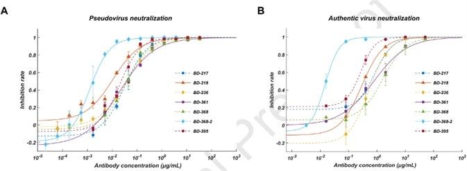 Pseudovirus neutralization result; B. Authentic virus neutralization result.