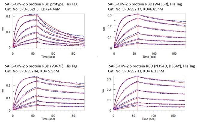 Bioactivity – Octet BLI results. The KD between Human ACE2 and prototype spike protein RBD is 24.4nM. The KD between Human ACE2 and RBD(V367F), RBD (W436R), and RBD (N354D, D364Y) were 5.5nM, 6.85nM, and 6.33nM respectively.