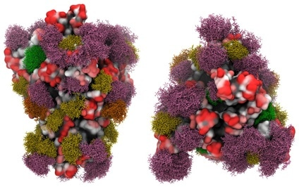 Side view (left panels) and Top view (right panels) of the SARS-CoV-2 S glycoprotein with site-specific glycosylation