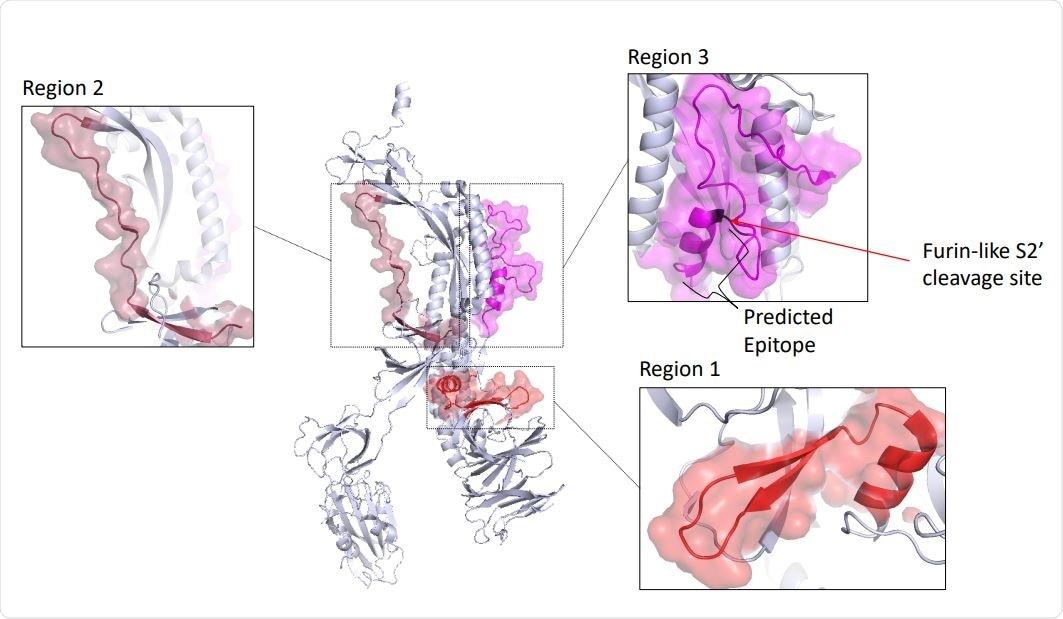 Regioni antigeniche e sedi del legame prevedute dell