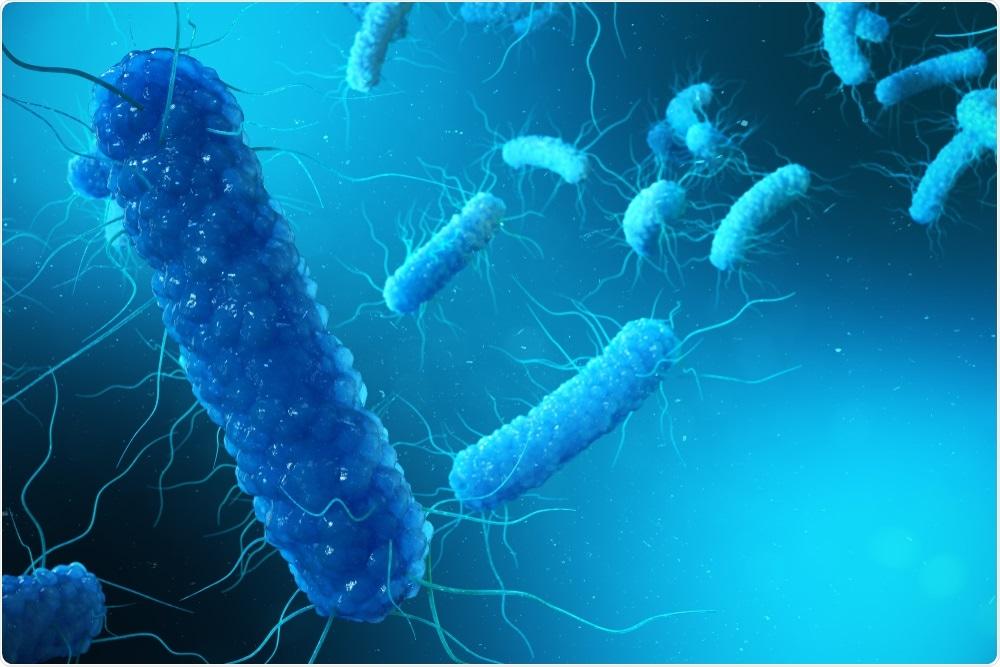 Bacilles gram négatifs