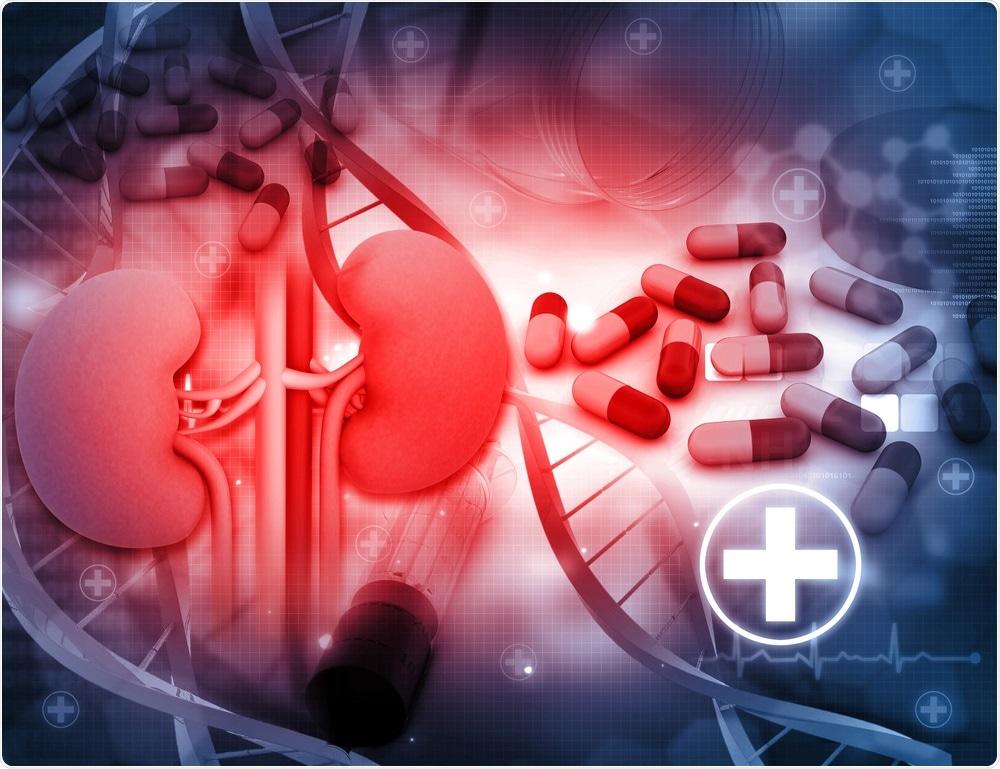 Studio: Effetti di Allopurinol sulla progressione della malattia renale cronica. Credito di immagine: Bluebay/Shutterstock