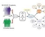 Use of whole blood transcriptomes may improve COVID-19 diagnosis and treatment