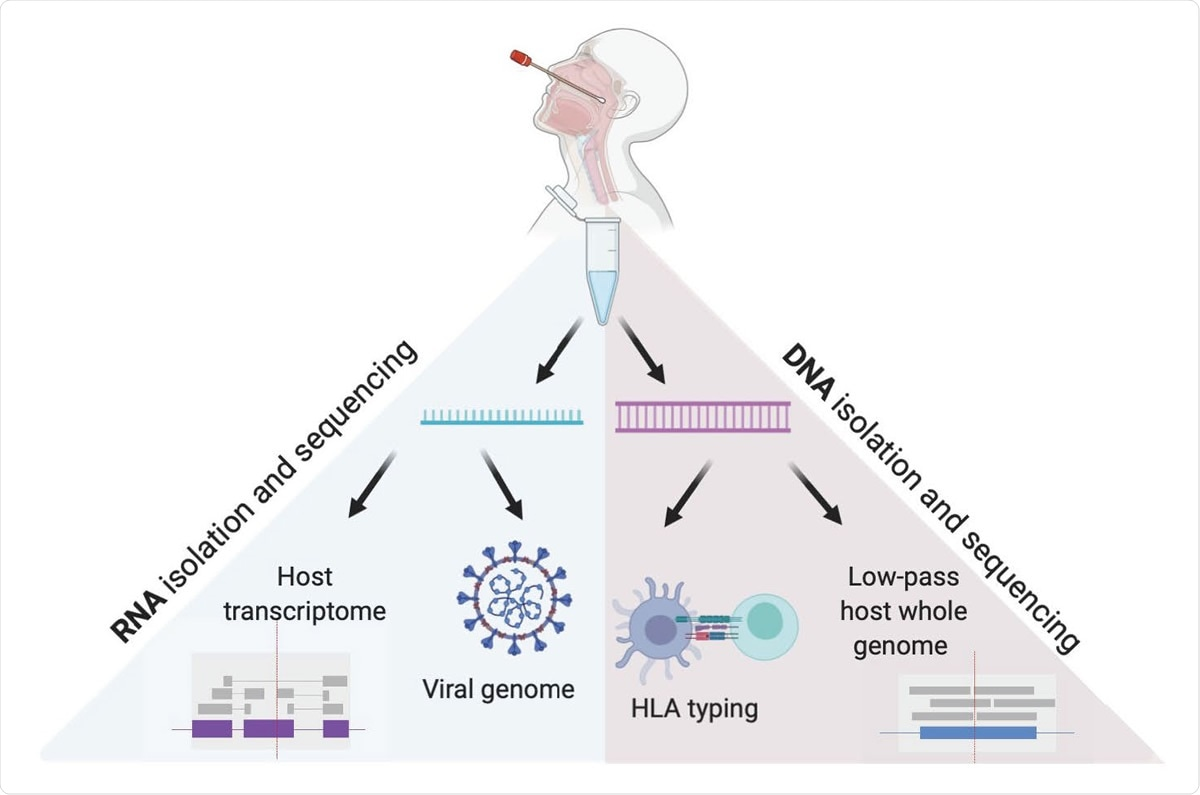 Genoma e transcriptomes ospite e virali da un singolo tampone rinofaringeo. Questo metodo tiene conto isolamento indipendente del DNA e del RNA dal tampone rinofaringeo VTM, permettendo al sequenziamento del genoma virale, alla rilevazione del transcriptome ospite, al sequenziamento del genoma passa-basso ospite e a HLA che ordinano nell