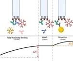 New assay improves detection of SARS-CoV-2 antibodies