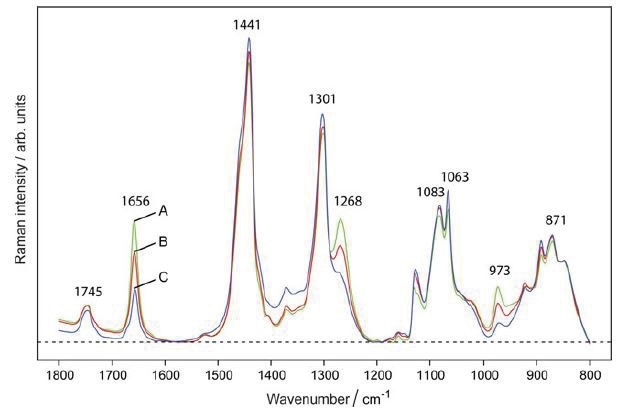 Raman spectra of (A) margarine, (B) 50:50 margarine–butter mixture, and (C) butter show that peaks at 973, 1268, and 1656 cm−1 are indicative of margarine in the sample. Reprinted with permission from Ref. 1. © 2016 Springer.