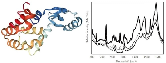 Using In-Line Raman Monitoring of Protein Crystallization