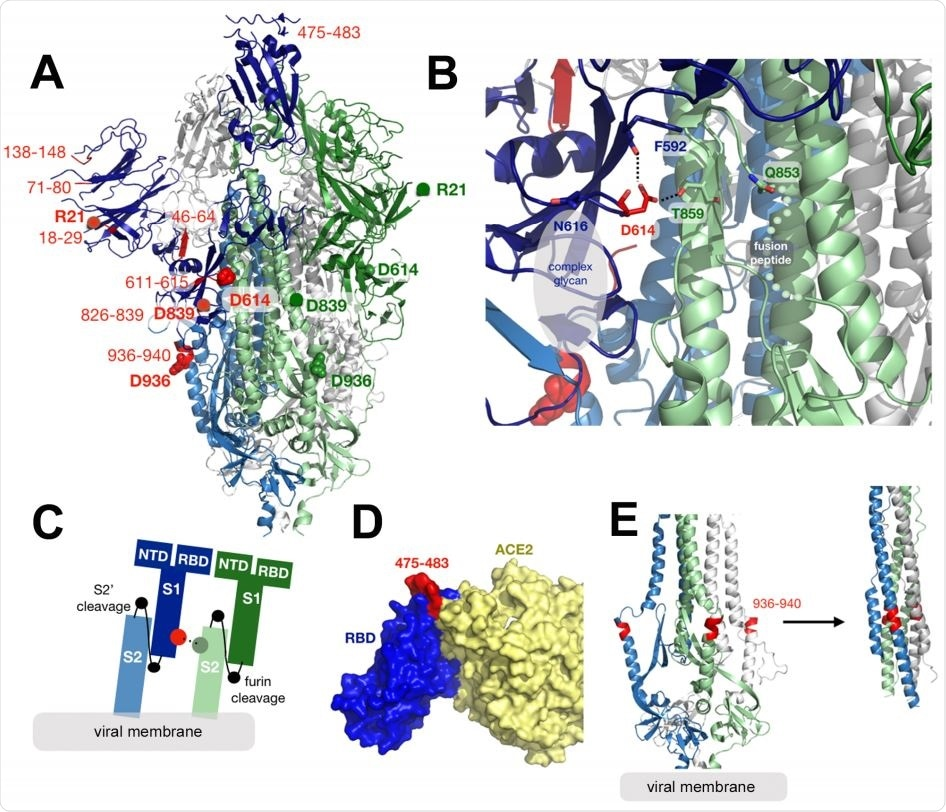 Structural mapping of amino acid changes and clusters of variation in the Spike protein.