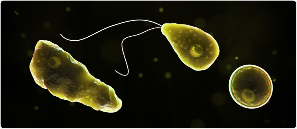 Computer-generated representation of Naegleria fowleri in its ameboid trophozoite stage, in its flagellated stage, and in its cyst stage.