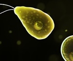 Florida man infected with brain-eating amoeba