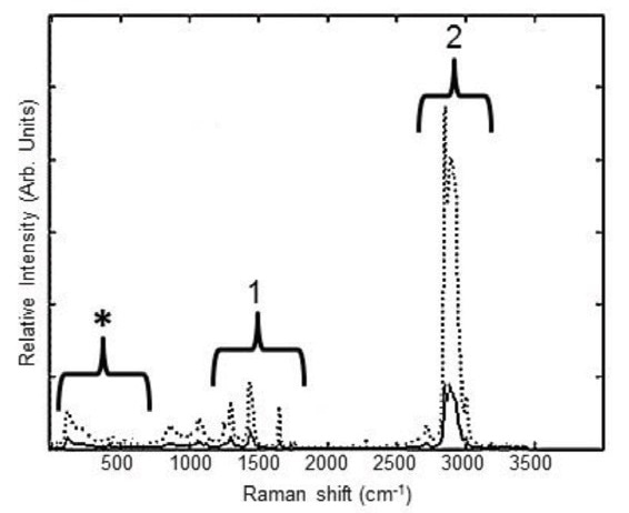 Raman spectra of intact pork fat tissue (dotted line) and melted pork fat (solid line) provide information on fatty acid saturation. Peaks related to lipids in pork tissue are noted in sections 1 and 2. Bands from the sapphire probe, in section *, do not interfere with collection of tissue Raman bands.