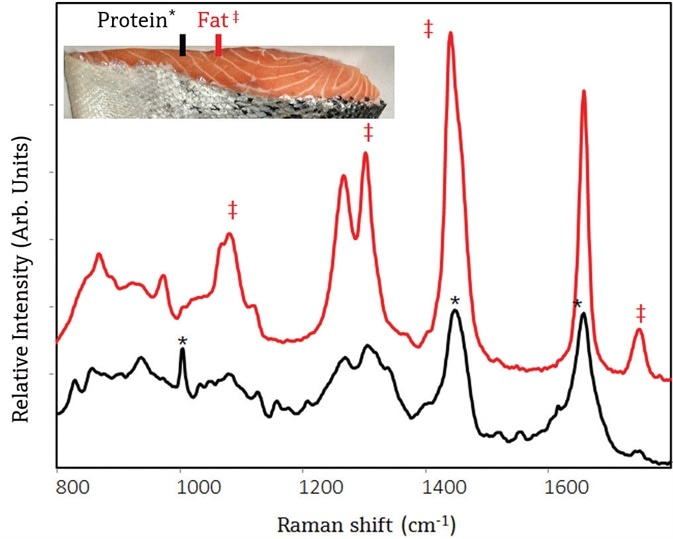 Raman spectra of Atlantic salmon using a small-area probe shows different chemical composition of meat and fat zones within the salmon. The top spectrum was collected from a fat zone, and spectral attributes unique to lipids are shown with a ‡. The bottom spectrum was collected from a muscle zone, and spectral attributes unique to muscle proteins are shown with a *.