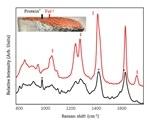 Multi-Attribute Salmon Quality Monitoring