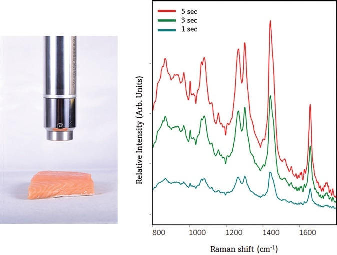 The PhAT probe provides a non-contact measurement of Atlantic salmon (left). The resulting Raman spectra show primarily contributions from lipids, as evidenced by the presence of narrow lipid bands at ~ 1750 cm-1 and 1301 cm-1, a narrower Amide I envelope at ~1650 cm-1, and a shifted CH3 envelope to ~1441 cm-1. Spectra were not preprocessed and are offset to enable clear visualization of each spectrum.