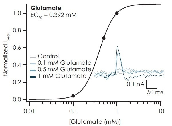 Glutamate transport was activated in iCell® GlutaNeurons upon addition of glutamate. Peak amplitude increased with increasing glutamate concentration with an EC50 of 0.391 mM. Traces recorded from the cells on the sensor of the SURFE2R N1 are also shown.