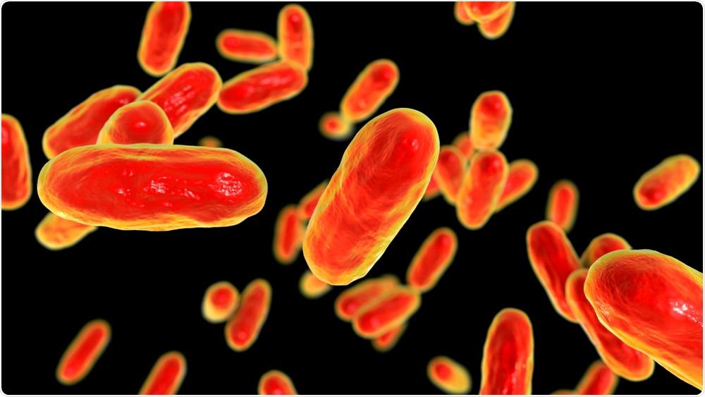 Bacteria Bordetella pertussis, 3D illustration. Image Credit: Kateryna Kon / Shutterstock