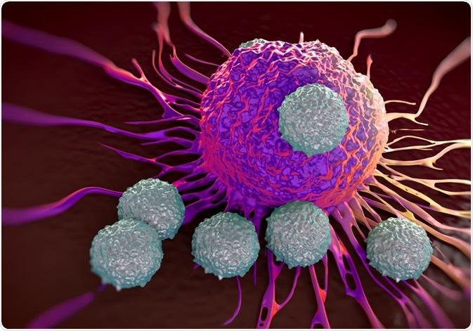 Linfociti T che attaccano cellula tumorale