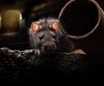 Rat plague following COVID-19?