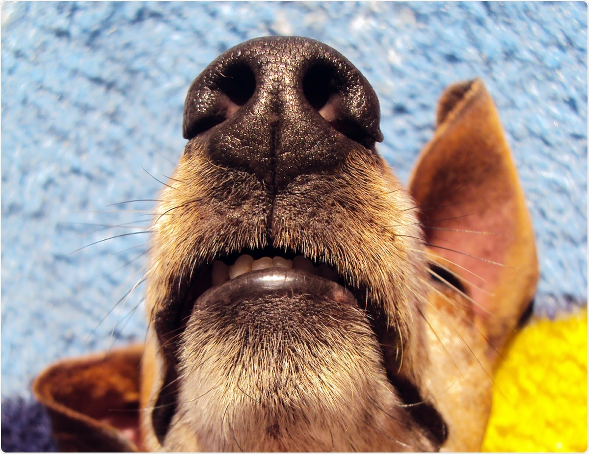 Study: Scent dog identification of samples from COVID-19 patients – a pilot study. Image Credit: Horus2017 / Shutterstock