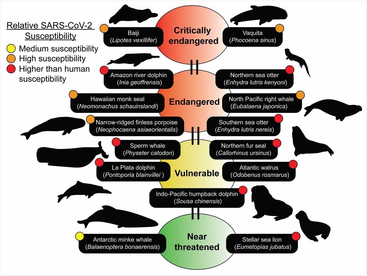 Le specie del cetaceo prevedute per essere suscettibili appartengono alla lista di rosso di IUCN. Molte delle specie prevedute per essere suscettibili sono membri della lista rossa di IUCN delle specie Threatened (https://www.iucnredlist.org). La lista rossa di IUCN è un indicatore della biodiversità del mondo e fornisce i dati più completi sullo stato globale di conservazione dell