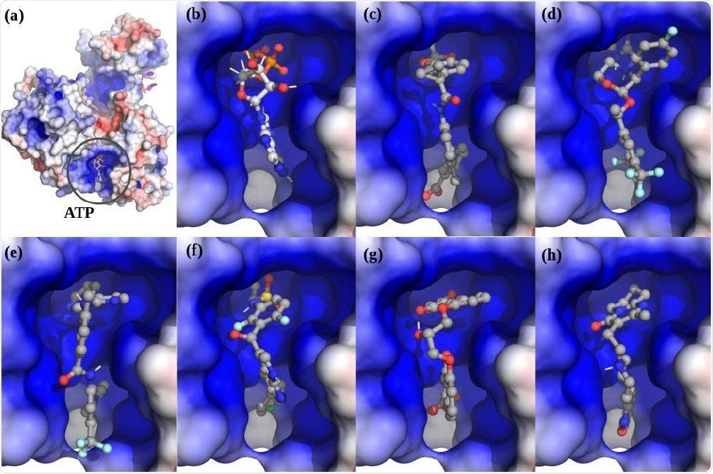 . The top scoring hits for the Nsp13 complex ATP ATP-site using virtual screening. (a) The Nsp13:ATP:RNA complex. (b) ATP. (c) Lumacaftor. (d) Emend (Aprepitant). Row Row-2: (e) Nilotinib. (f) Zelboraf. (g) Cromolyn. (h) Risperdal.