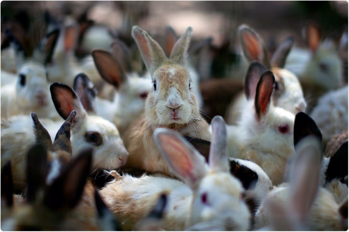 Study: Susceptibility of rabbits to SARS-CoV-2. Image Credit: TY Lim / Shutterstock