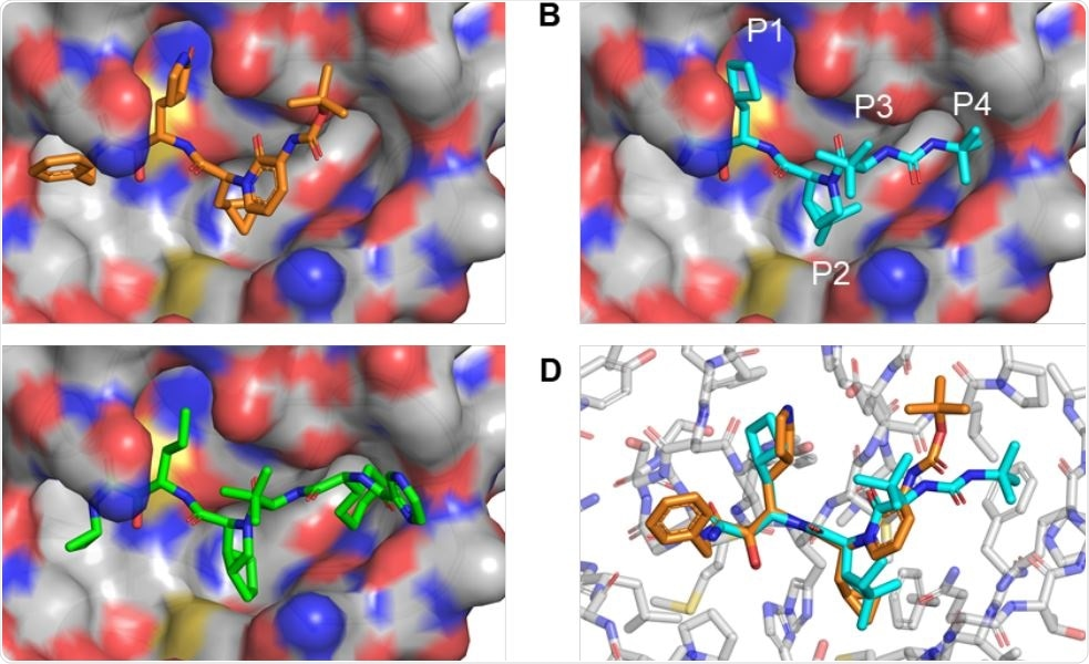 HCV protease inhibitors with a P2 proline analog can be docked into the SARSCoV2 Mpro active site. (A) Co-crystal structure of SARSCoV2 Mpro and inhibitor 13b (PDB 6Y2G). (B) Using Pymol, boceprevir was placed into the SARSCoV2 Mpro active site and unconstrained bonds were manually rotated for optimal complementary with the S1 and S2 pockets and hydrogen-bonding to the backbone carbonyl of Glu-166. (C) Telaprevir was similarly docked into the SARSCoV2 Mpro active site for optimal complementary with the S1, S2, and S4 pockets and hydrogen-bonding to the backbone carbonyl of Glu-166. (D) Alignment of the 13b-Mpro cocrystal with the manually docked boceprevir structure shows that the backbone of the P2-analogous segment of 13b is superimposable with the proline analog of boceprevir.