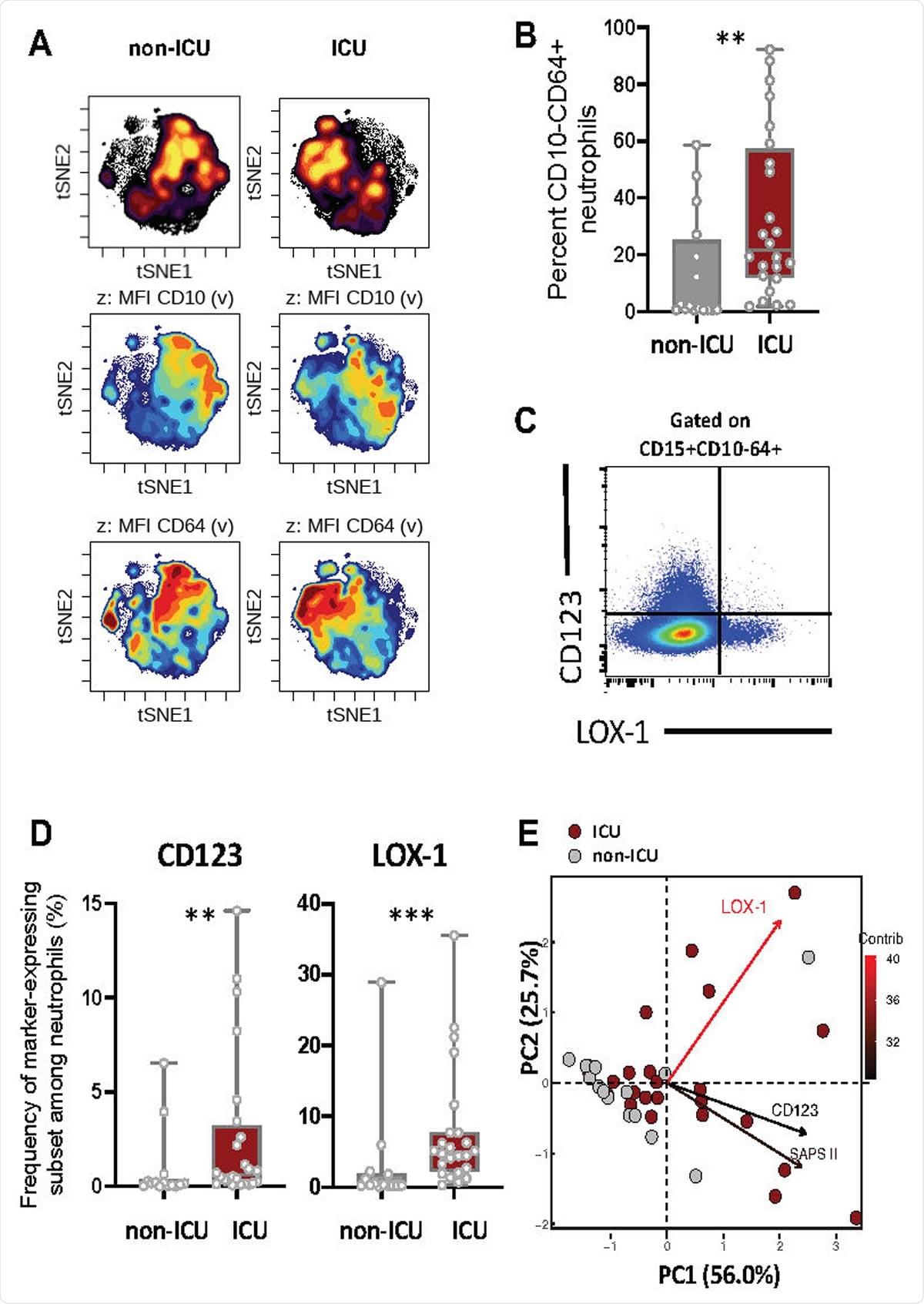 Les patients COVID-19 sévères manifestés ont augmenté les sous-ensembles immatures de neutrophile exprimant CD123 ou LOX-1. (a) l