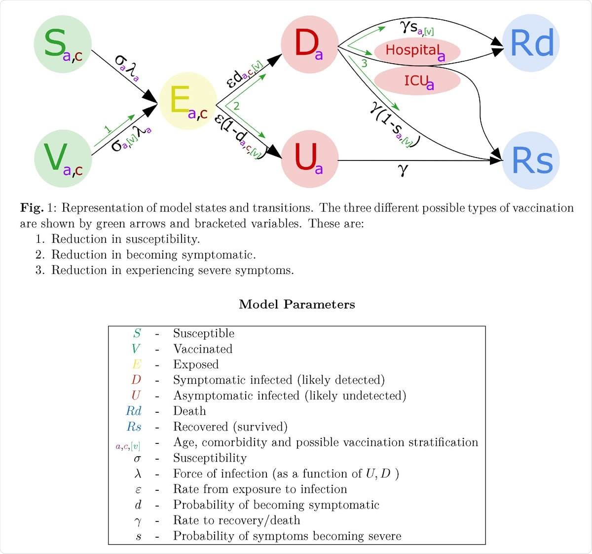 Representation of model states and transitions