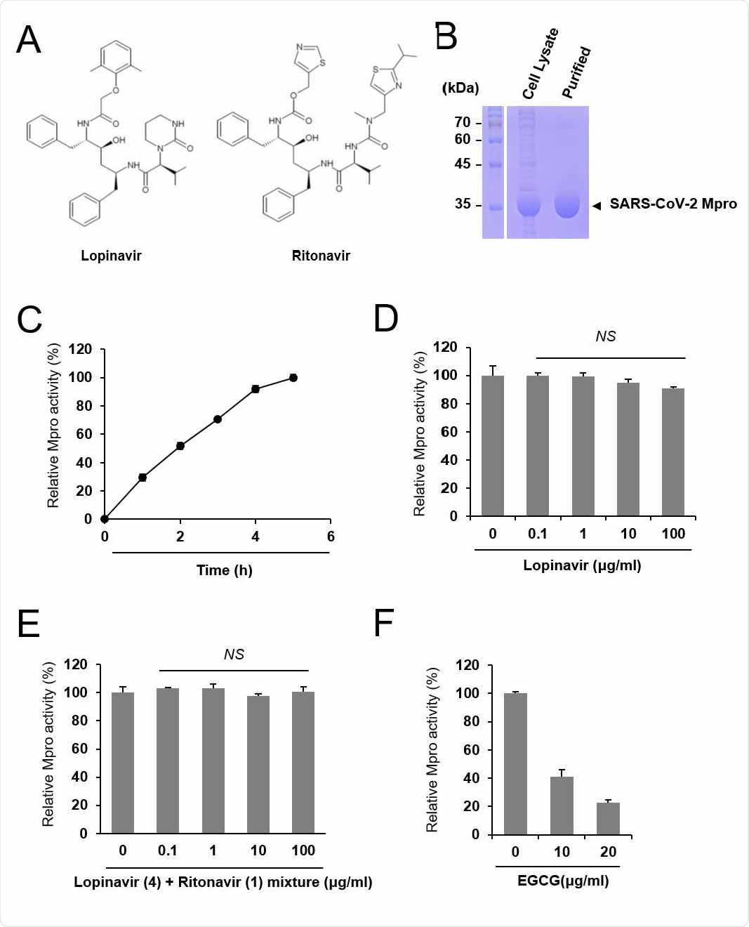 Lopinavir is ineffective to inhibit SARS-CoV-2 Mpro. (A) Chemical structure of lopinavir and ritonavir. (B) Purification of SARS-CoV-2 Mpro. Cell lysate and purified Mpro protein were subject to SDS-PAGE. (C) Measurement of the relative Mpro activity over time. Activity is measured relative to maximal activity at 5 hr. (D) Lopinavir did not inhibit Mpro. Indicated concentrations of lopinavir were incubated with Mpro and the relative protease activity was determined. The Mpro activity was measured in quadruple and the mean and standard deviation are shown. NS, not significant. (E) Mixtures of lopinavir and ritonavir at a weight ratio of 4:1 were incubated with Mpro, and the relative protease activity was determined. (F) EGCG was incubated with Mpro, and the protease activity was examined as a positive control.